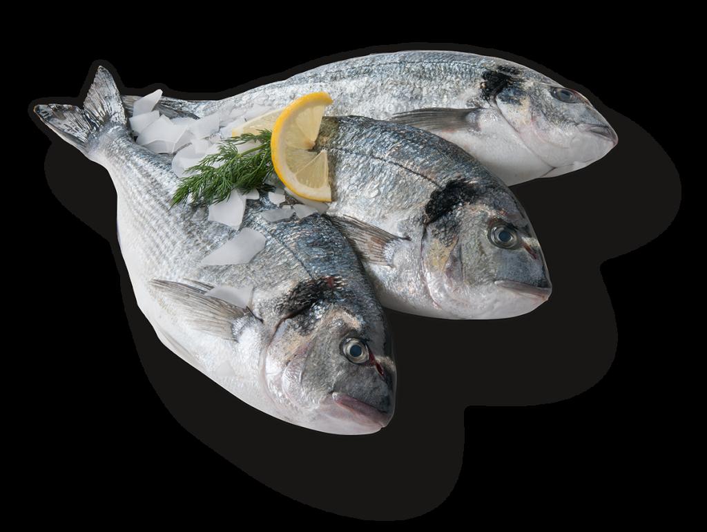 Vishandel Viswinkel Visscher Seafood Zwolle Verse vis